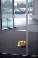 The entranceway cat at ASB Sports Centre in Wellington, New Zealand on Sunday, 1 July 2018. Photo: Dave Lintott / lintottphoto.co.nz