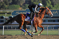 Blueskiesnrainbows, trained by Jerry Hollendorfer, trains for the Breeders' Cup Marathon at Santa Anita Park in Arcadia, California on October 30, 2013.