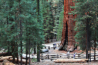 Stock photo: General Sherman tree standing magnificently in the Sequoia national park, California USA.