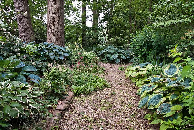 Delightful Hosta Shade Garden And Walkway Under Trees Wooded