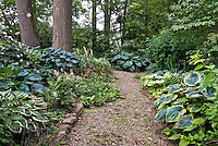 Hosta shade garden and walkway under trees wooded