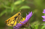Unknown skipper, Lycoming County PA