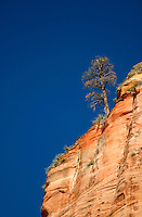 Tree on canyon rim against blue sky, Zion National Park, Washington County, U