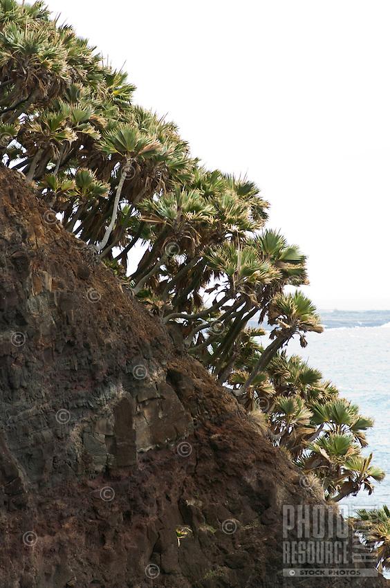 Loulu palm trees on a rock pinnacle on the north shore of Moloka'i.