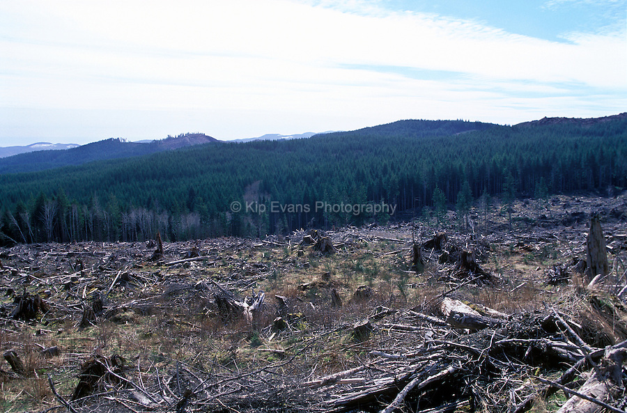 Clear cut forest in California