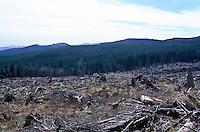 Clear cut forest in California