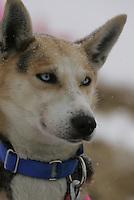 Dee Dee Jonrowe Dog