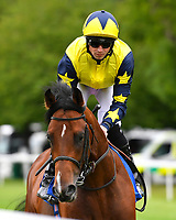 Desert Island ridden by Jack Mitchell goes down to the start of The Wilton Homes Novice Stakes during Evening Racing at Salisbury Racecourse on 11th June 2019