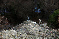 Max George and Jean Claude Authier walk far over rough terrain in search for truffles in the Alpes Maritimes, France, 09 February 2011. Black truffles are mainly found during winter months, unaffected by cold temperatures. However, if snow is laying and the ground is frozen, the hunters and their dogs will be unable to dig.