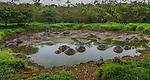 Galápagos tortoises, Galápagos Islands, Ecuador