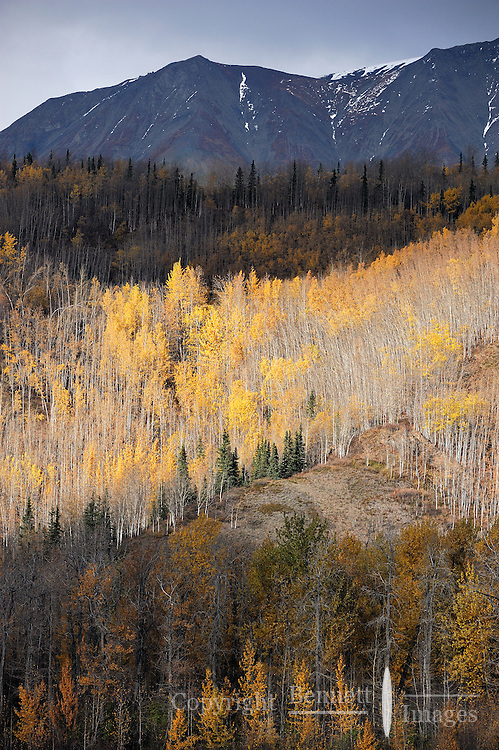 A few fall colors remain along the Matanuska River in Southcentral Alaska on a late fall day.
