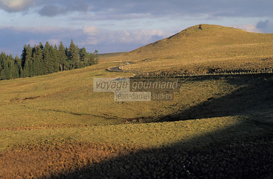 Europe/France/Auverne/63/Puy-de-Dôme/Monts du Cezallier/Env. de la Godivelle: Paturages