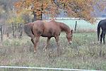 Am frühen Morgen nach der Trauerfeier ging Teresa Enke unweit Ihres Anwesen mit den Hunden allein mit ihren Hunden spazieren. Am Ende des Weges galoppierte ihr braunes Pferd auf der Weide.<br />  <br /> Foto: © nph ( nordphoto )