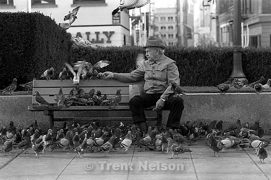 Old man on bench and pigeons in Union Square.<br />