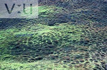 Alpine hummocky tundra, patterned ground