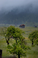Cattle sheds in the mist, Imst district, Tyrol/Tirol, Austria, Alps.