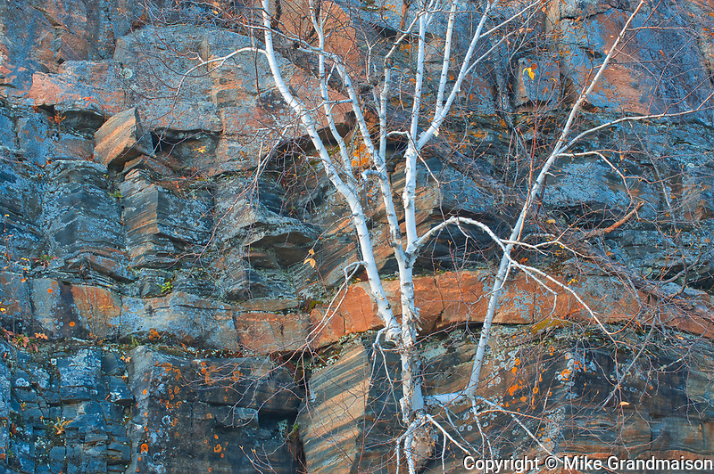 White birch (Betula papyrifera) tree and rock face of Precambrian Shield<br />Whiteshell Provincial Park<br />Manitoba<br />Canada