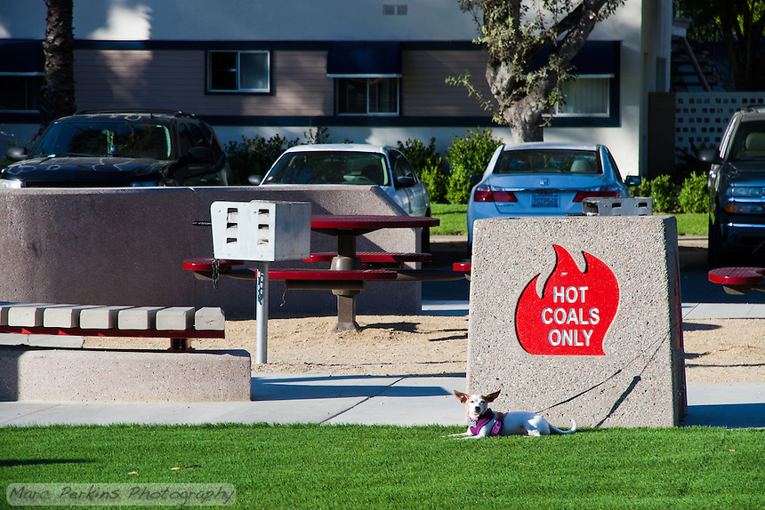 "A small dog sits on artificial turf in front of the ""hot coals only"" bin in the picnic area of Circle Park, a pocket park located on Park Circle Drive in Anaheim, California."