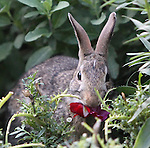 Snapdragons are yummy!
