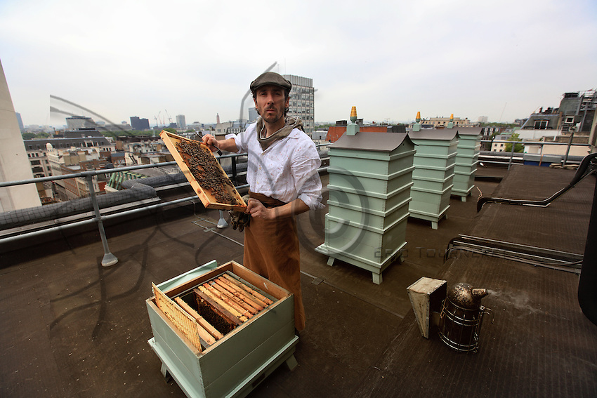 "A stone's throw from Piccadilly, Steve Benbow, the beekeeper of the London Bridge, set up hives in 2006 on the terrace of Fortnum and Mason's to produce an exceptional honey for the famous store. ""The hives are on top of the roof at Piccadilly, facing south."" In 2007, the colonies spent the summer in Oxfordshire, a last breath of fresh air before taking up permanent residence on the roof in Piccadilly in 2008. ""After an afternoon of tasting honey, I learned that the best honey is like a good wine: full of bouquet and sensations, far from those honeys mixed to create standardized products. We are a British company and we have a good range of British honeys and the biggest selection- available in Great Britain - of 33 varieties from throughout the world, some exceptionally rare."""