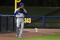 Cat on the field as the Indiana State Sycamores takes on the Vanderbilt Commodores on February 20, 2015 at Charlotte Sports Park in Port Charlotte, Florida.  Vanderbilt defeated Indiana State 3-2.  (Mike Janes/Four Seam Images)