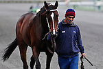 31 October 2009: A horse and his groom head back to the barn area after an unsuccessful race on Keeneland's final day of racing at the autumn meet.