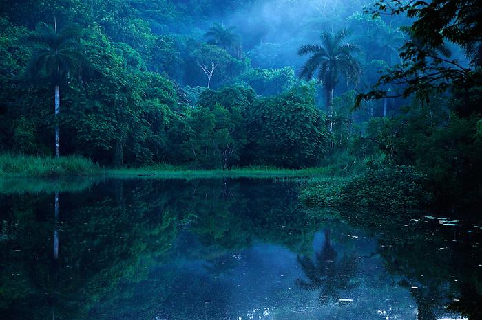 &quot;Majestuosa primera luz, vigilante sereno de tierra embrujada&quot;.<br /> <br /> Amanecer virgen / bosque lluvioso tropical / Pluvisilva / Parque Nacional Camino de Cruces, Panam&aacute;.<br /> <br /> Edici&oacute;n de 10 + 1 P/A | V&iacute;ctor Santamar&iacute;a.
