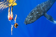 woman snorkeler encountering humpback whale, Megaptera novaeangliae, Hawaii, Pacific Ocean, model released