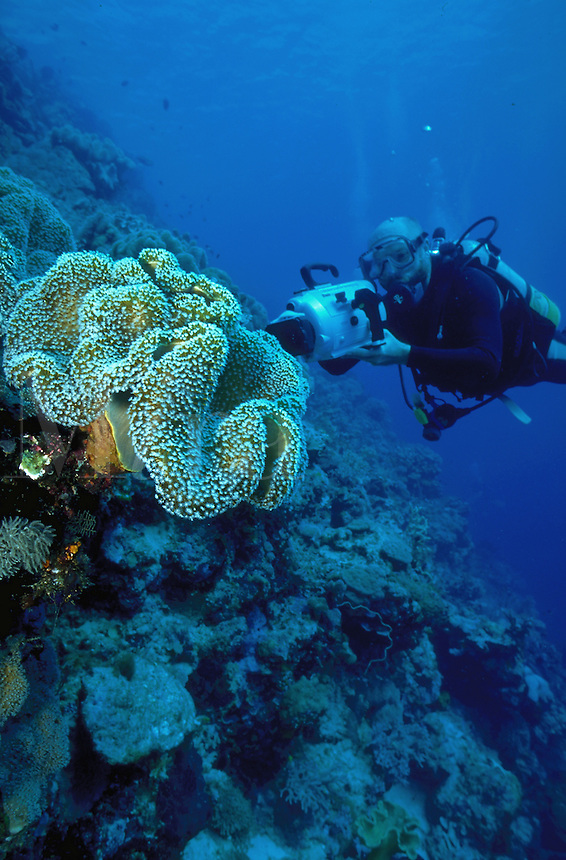 A diver examines soft coral. New Guinea.