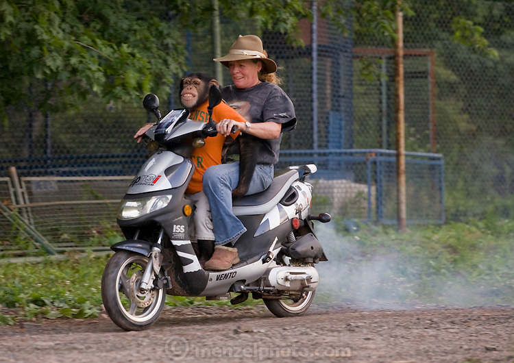 Ricki the chimp clings to Pam Rosaire-Zoppe's legs as he enjoys a ride on her scooter at the Bailick Ranch and Discovery Zoo in Catskill, NY. Ricky the chimp is owned by Pam Rosarie-Zoppe and Roger Zoppe. (Ricki the chimp is featured in the book What I Eat: Around the World in 80 Diets.)