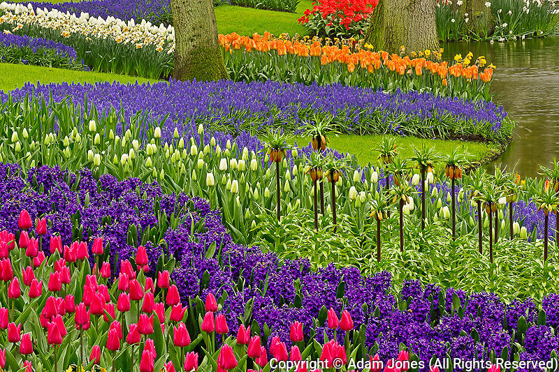 Pattern of tulips hyacinth, and Grape Hyacinth flowers, Keukenhof Gardens, Lisse, Netherlands