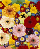 Interlitho-Alberto, FLOWERS, BLUMEN, FLORES, photos+++++,flowers,KL16546,#f#, EVERYDAY