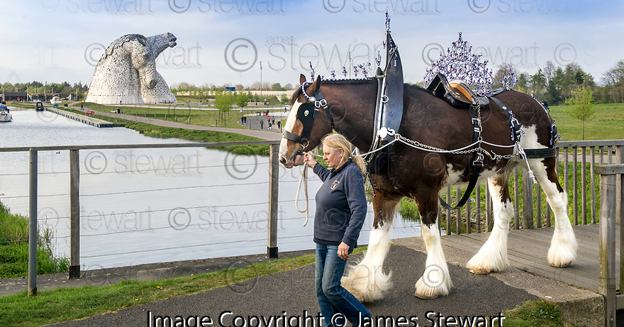 Clydesdale Horses at the Kelpies