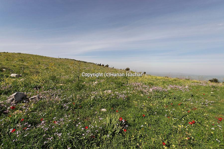Israel, springtime on Mount Gilboa