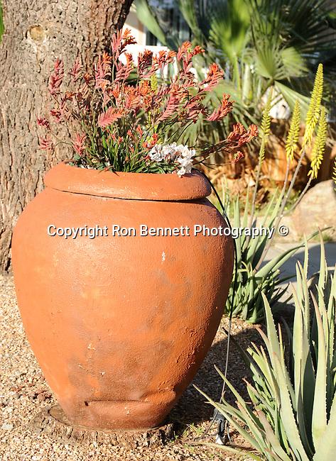 Jar and flowers, California