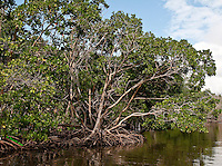 Mangroves, Flamingo Park, Florida Everglades National Park, Everglades Canal<br />
