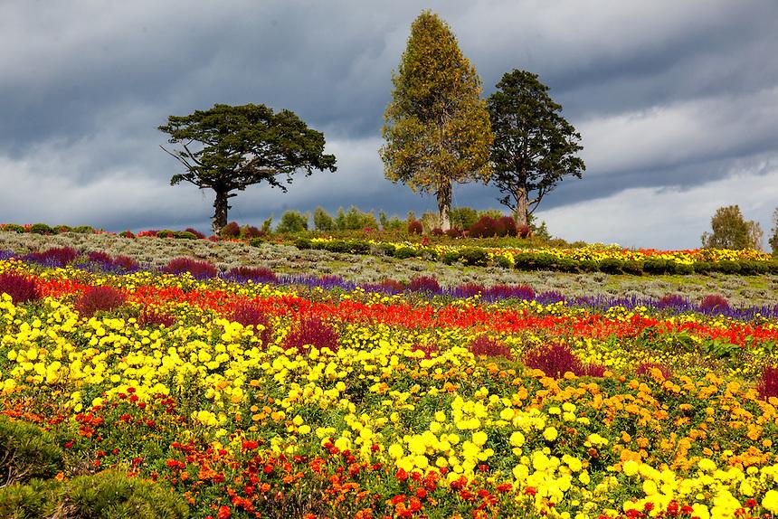 Biei Flowers