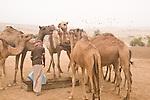 Bedouin in the Jabal Samhan. Oman - National Geographic Traveler