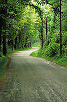 Rural road overhung by dense Pacific coast rainforest. Beddis Road, Gulf Islands, trees, curve, gravel, country. British Columbia Canada Saltspring Island.