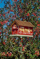 Flowering quince with red barn birdhouse painted with old time tobacco advertisement, Missouri USA