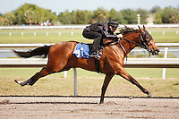 #91.Fasig-Tipton Florida Sale,Under Tack Show. Palm Meadows Florida 03-23-2012 Arron Haggart/Eclipse Sportswire.