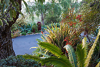 Foliage textures along driveway with Bromeliad, Nandina and Dioon spinulosum in Patrick Anderson Garden