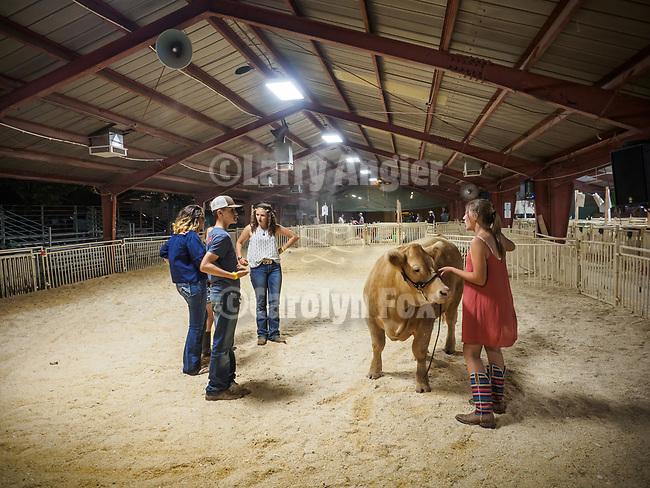 Late night practice showing a steer. The 79th Amador County Fair, Plymouth, Calif.<br /> <br /> <br /> #AmadorCountyFair, #PlymouthCalifornia,<br /> #TourAmador, #VisitAmador,