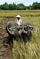 pflügende Büffer in Cu Chi, Vietnam