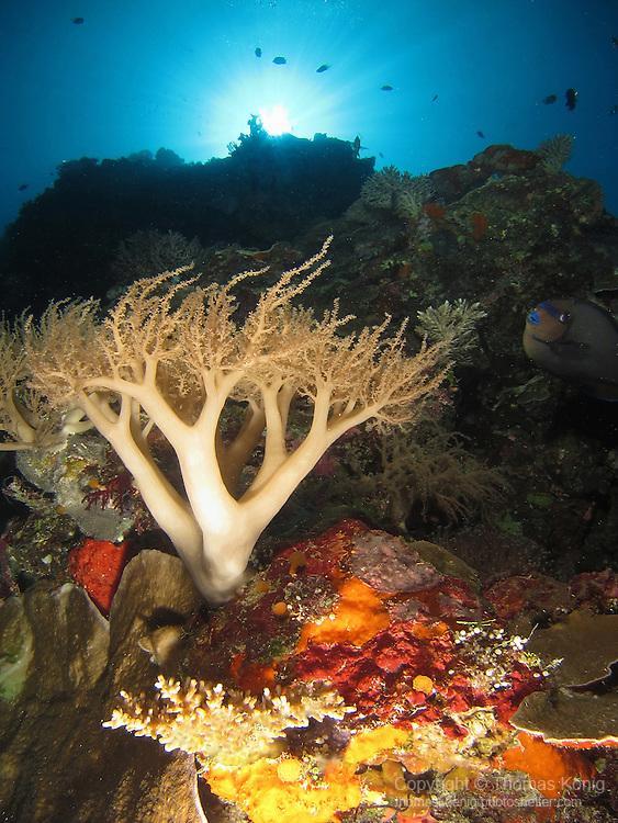 Siaes Tunnel, Palau -- Colorful coral on a sea wall.