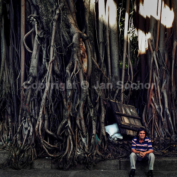 A Colombian man sits under the aerial roots of a large ficus tree in Parque Bolívar, Medellín, Colombia, 13 December 2016.
