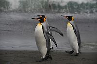 Kings on patrol
