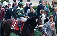 Horse racing; racehorse; Thoroughbred; racetrack, Gulch, Mr. Prospector, sire, stallion, Aqueduct Racetrack, Kiaran McLaughlin