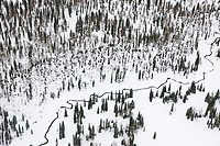 Aerial of steam flowing through boreal forest of black spruce trees.