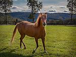 Fergusonville Farm - Horse